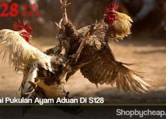 Menilai Pukulan Ayam Aduan Di S128