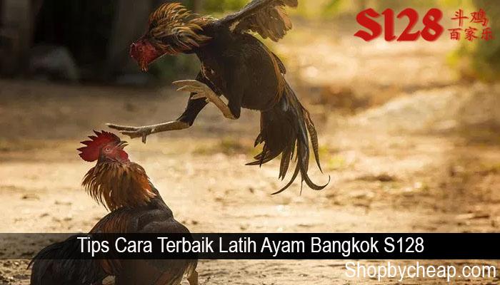 Tips Cara Terbaik Latih Ayam Bangkok S128